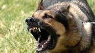 هشدار وزارت بهداشت درباره افزایش حیوانگزیدگی؛ سگها در رتبه اول هستند