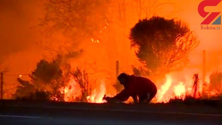 فیلم لحظه نجات یک خرگوش توسط مرد فداکار از دل آتش سوزی مهیب + عکس