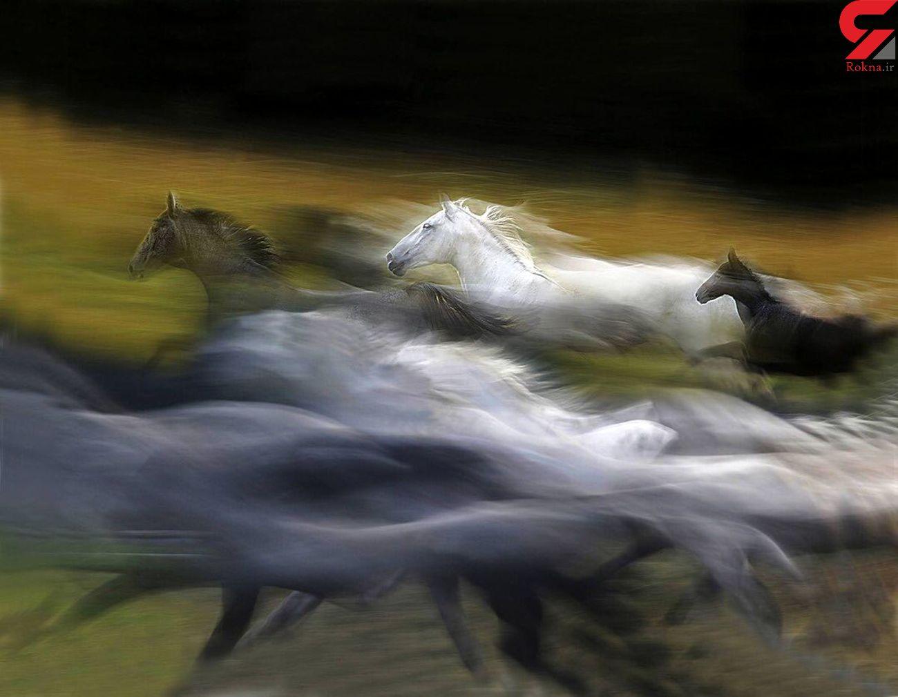 عکس بی نظیر از دویدن اسبها!