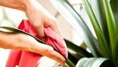 ترفندهایی برای شادابی گل های پژمرده