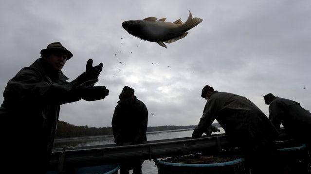 مراسم صید ماهی کپور در جمهوری چک + تصاویر