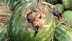 هندوانه به شرط تریاک/ چهار قاچاقچی دستگیر شدند