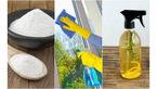 درخشش شیشه ها با شیشه پاک کن های طبیعی و دوستدار محیط زیست