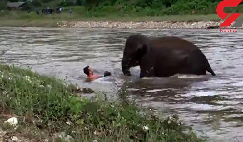 حیوان غول پیکر مرد جوان را از مرگ حتمی نجات داد +عکس