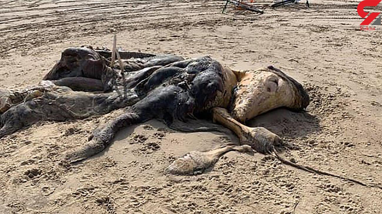 پیدا شدن جانور عجیب الخلقه در ساحل دریا! + عکس / انگلیس