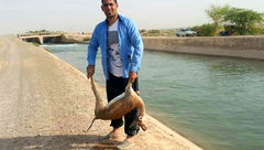 مرگ یک آهوی دیگر در کانال سازمان آب و برق خوزستان +عکس