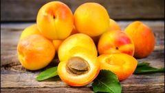 مرگ انسان با خوردن هسته این میوه