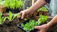 سبزی کاری در آپارتمان