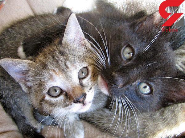 گربه های خانگی و مواد شیمیایی سمی در بدن آن ها