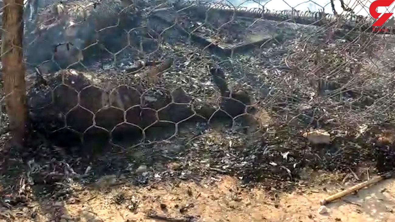 حمله وحشیانه به خانه ای در دهلران / همه جا در آتش سوخت  + فیلم تکاندهنده