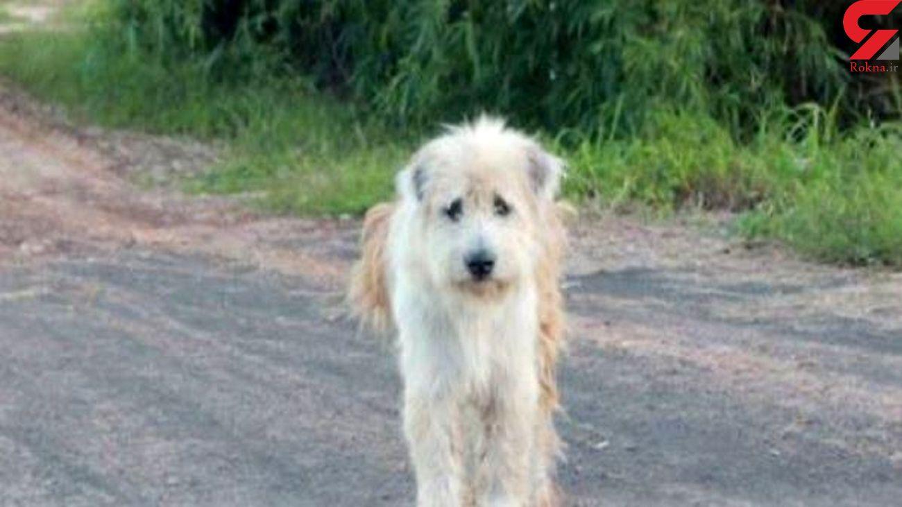 سگ وفادار ۱۱ سال منتظر صاحب مرده خود است + فیلم