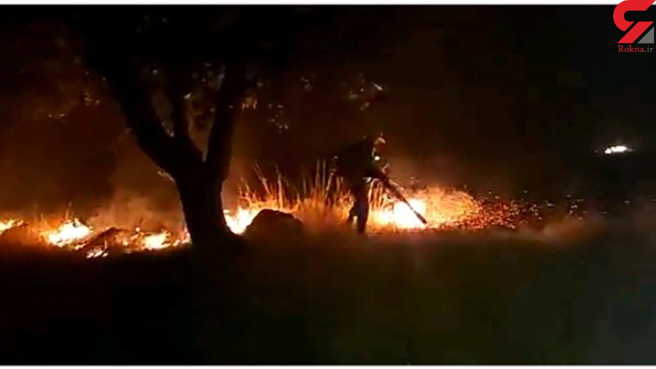 5 آتش سوزی در جنگل های کهگیلویه و بویراحمد مهار شد