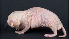 تصاویری از موجودات عجیب و ترسناک که تا به حال ندیده اید!