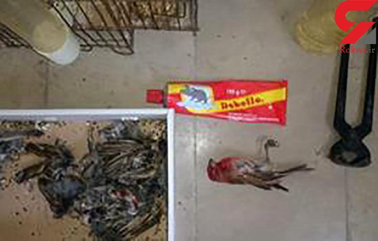 دستگیری شکارچی سهره در اردبیل