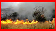 آتش بلای جان مزارع گندم و جو در دشت ورامین + عکس
