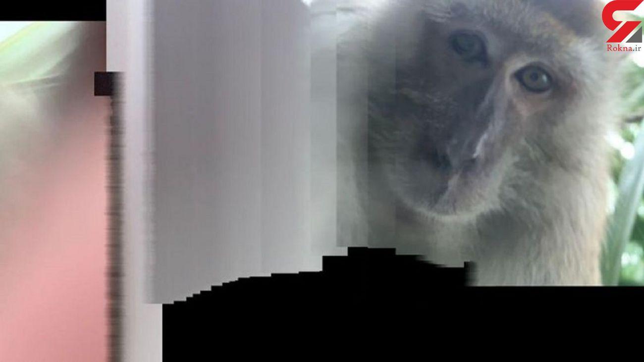 عکس های سلفی میمون پس از دزدیدن گوشی! + فیلم