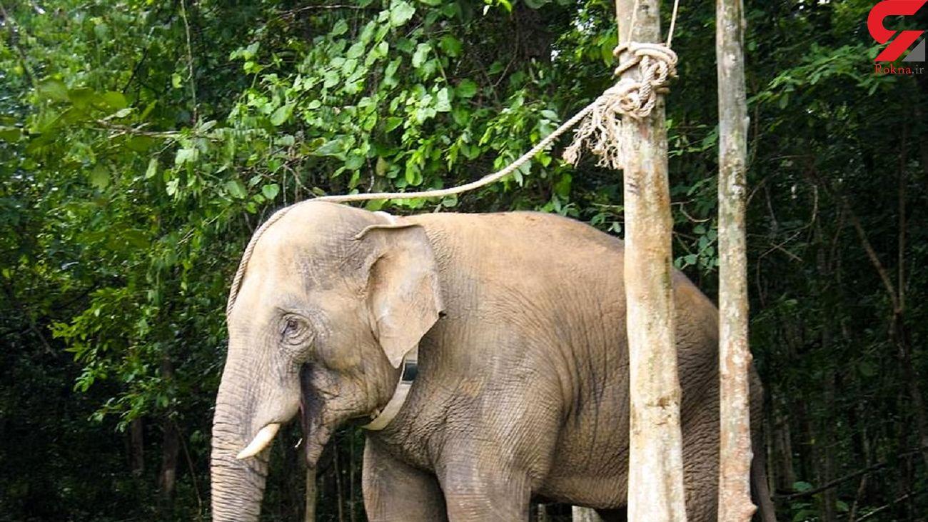 قدردانی یک فیل از یک دامپزشک !