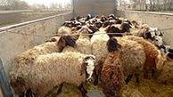 بازداشت چوپان دروغگو در  زنجان / او ناپدید شدن گوسفندان را گردن گرگ انداخته بود !
