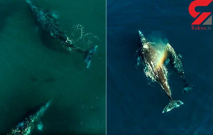 رقص تانگوی دریایی نهنگ و دلفین + فیلم و عکس