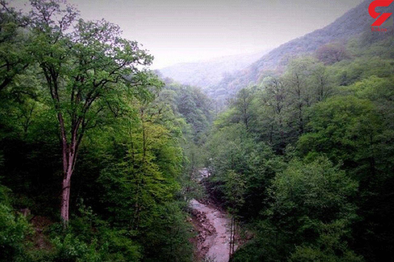 ماجرای ادعای مالکیت بخشی از جنگلهای مازندران با یک سند قاجاری!