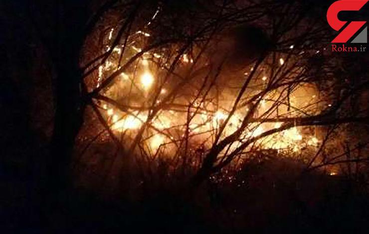 آتش سوزی در جنگل های اندیمشک/ درخواست بسیج عمومی برای مهار آتش