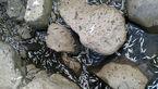 تلف شدن ماهیان در رودخانه «جلمارود» + عکس