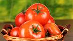 گوجه فرنگی 50 درصد ارزان شد