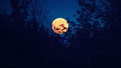جادوگری ماه توت فرنگی / نادرترین حادثه دنیای خلقت+فیلم و عکس