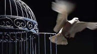 آزادی 20 زندانی در زنجان