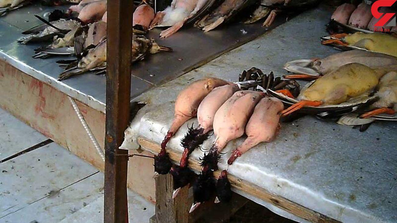 تخلفات خونین در بازار پرنده فریدونکنار