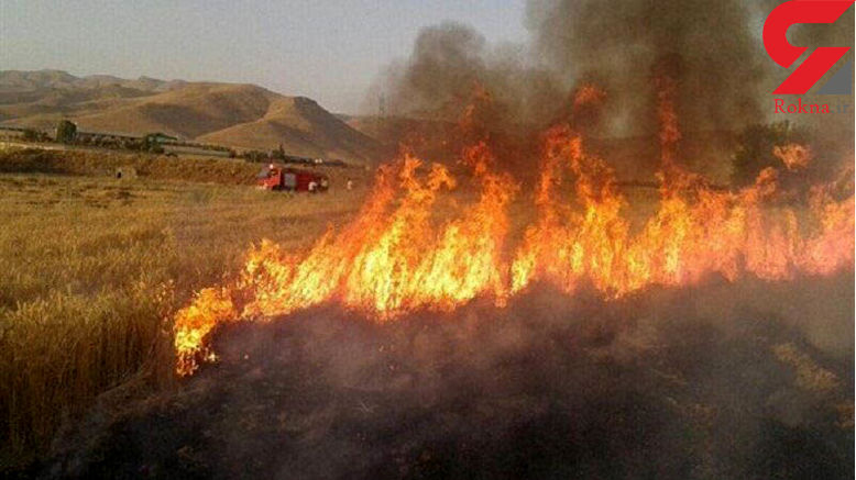 ترس از رقص آتش در مزارع جنوب تهران