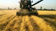 خود داری از خرید تضمینی گندم  کشاورزان ایرانی  /گندم کاران بلا تکلیف مانده اند