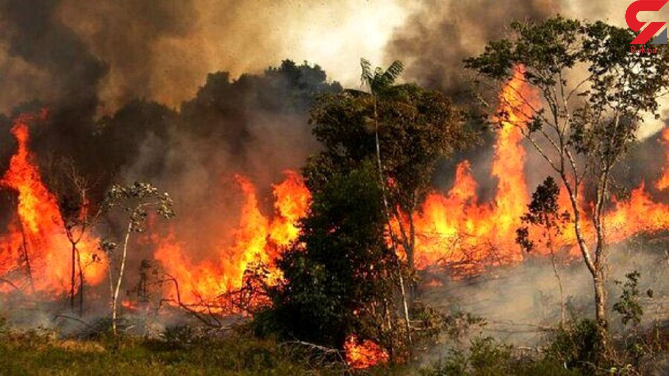 آتش زدن سریالی پارک های تهران با چه هدفی صورت می گیرد؟ /  بدخواهان پارک ها را آتش می زنند!