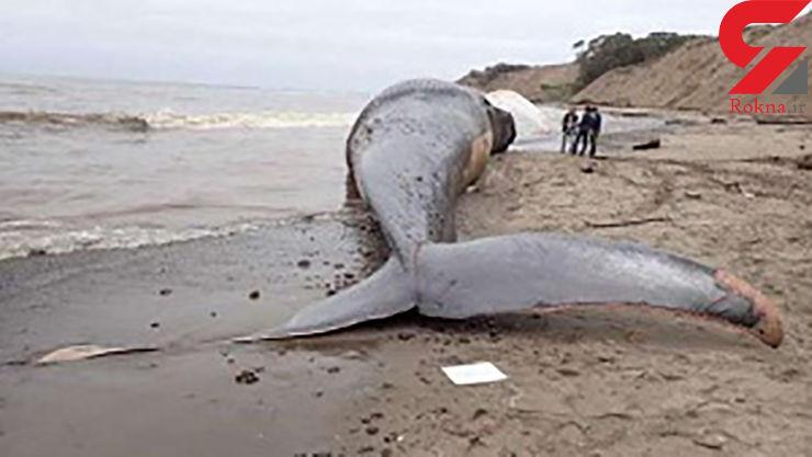 برخورد قایق با نهنگ ۸۷ کشته بر جای گذاشت
