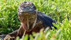 تصاویر دیدنی و بی نظیر از جزیره گالاپاگوس