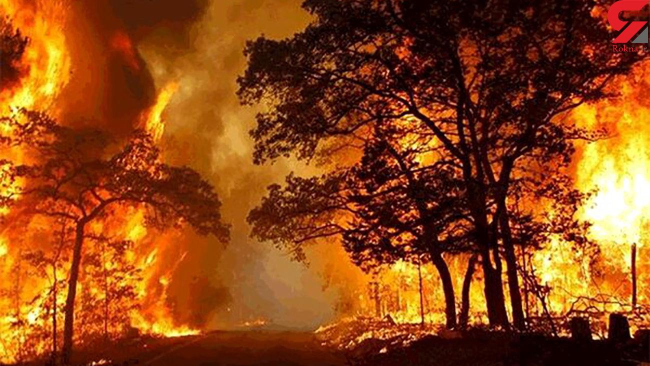 تلاش برای مهار آتشسوزی در جنگلهای بلوط بلند اردل