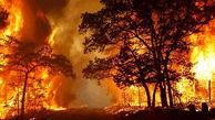 سوختن 65 درخت در مزار شهدای بیرجند / دلیل آن چه بود؟