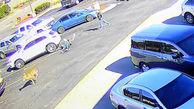 فیلم لحظه حمله گوزن به یک مرد در پارکینگ