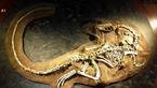 کشف جسد کامل یک دایناسور همه را شگفت زده کرد+عکس