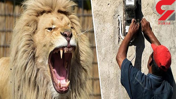 حمله شیر به مرد برق کار به خاطر مطالبه دستمزد
