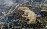 پشت پرده عکس و فیلم های مرگ حیوانات در آتش سوزی خائیز !