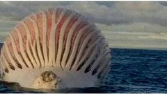 تصویری وحشتناک از نهنگی در دریا +عکس