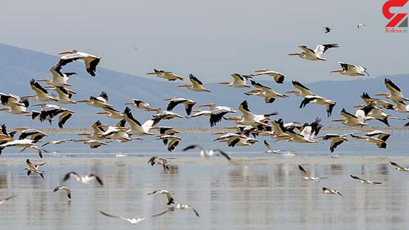 آمار پرندگان سرشماری شده در سال 98