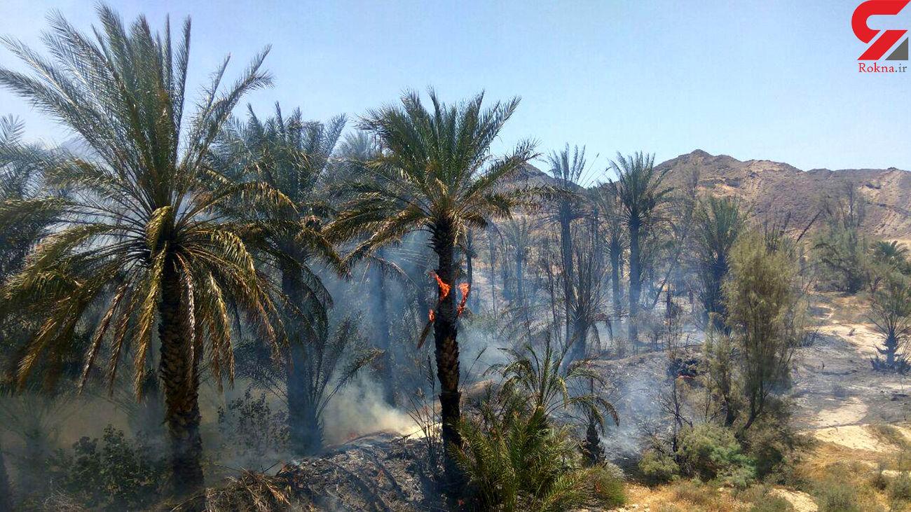 50 هکتار از  جنگلها و مراتع جنوب کرمان در آتش سوخت