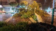 سقوط درخت در خیابان تهران بر اثر طوفان شدید