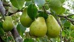 جسم تان را با این میوه پرقدرت کنید