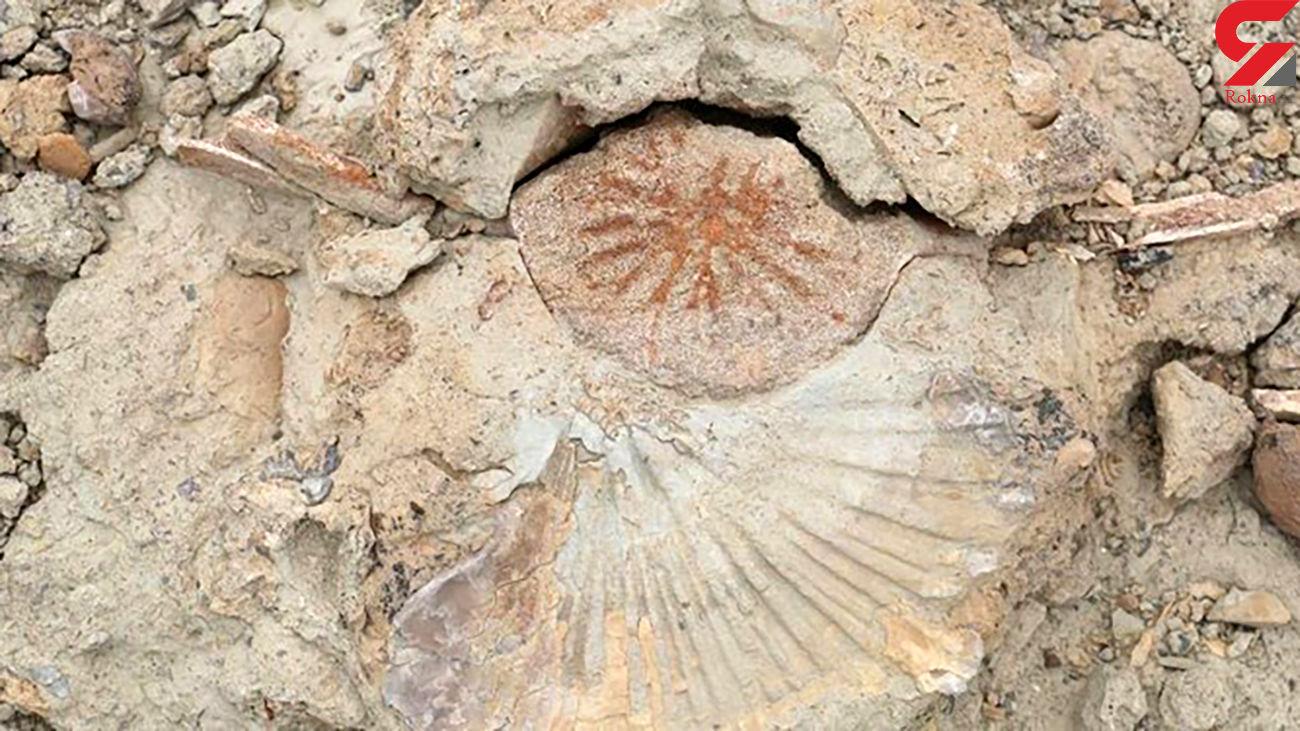 کشف فسیل های جانوری قدیمی در کوههای روستای رودیک چابهار + عکس