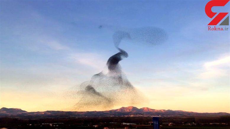 لحظه پرواز شگفت انگیز و زیبای سارها در آسمان اسپانیا +فیلم