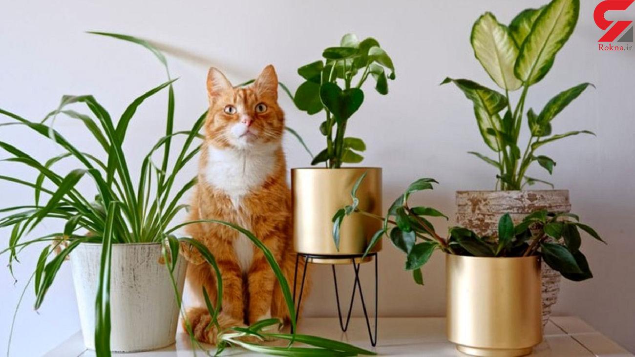 این گیاهان آپارتمانی سلامت شما را تهدید می کند + عکس
