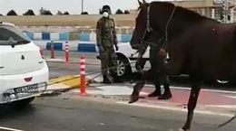 فیلم تلخ از لحظه اسب آزاری توسط راننده ماشین تیبا + تصویر